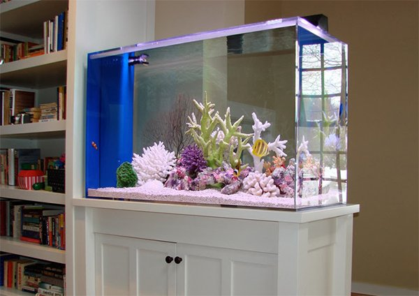aquarium design for interior