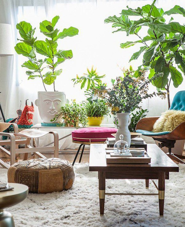 Living room your first impression make it perfect for Living room with indoor plants