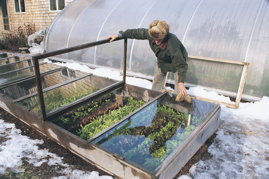 growing plant during winter time